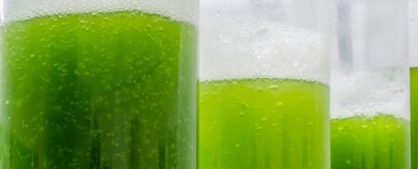 A power cell that harnesses electricity from algae | Algal Biofuels | Scoop.it