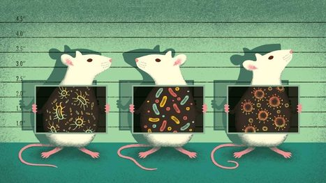 Mouse microbes may make scientific studies harder to replicate | Darwinian Ascension | Scoop.it