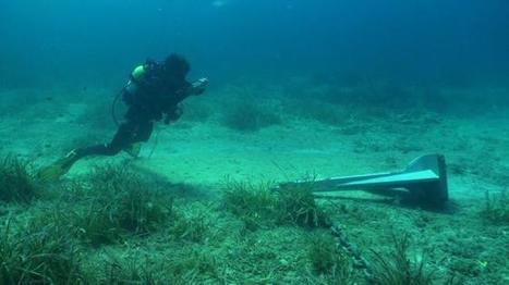 El organismo vivo más grande del mundo se muere   ecology and economic   Scoop.it