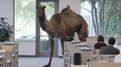 School bans students from using popular 'Hump Day' phrase | Bans in Schools | Scoop.it