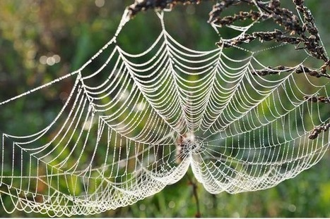 #277 Spinning a web of generous connections | This gives me hope | This Gives Me Hope | Scoop.it