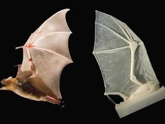 3D-printed robotic bat wing holds new possibilities for small aircraft | 3D Printing and Fabbing | Scoop.it