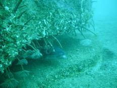 Une étude d'opportunité sur le développement de récifs artificiels dans le bassin d'Arcachon | Destination Bassin d'Arcachon | Scoop.it