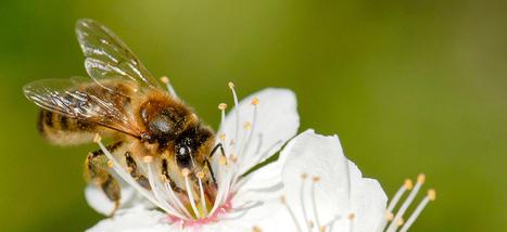 Des abeilles à l'école! - Participez à la transition énergétique pour la croissance verte | TRANSITURUM | Scoop.it