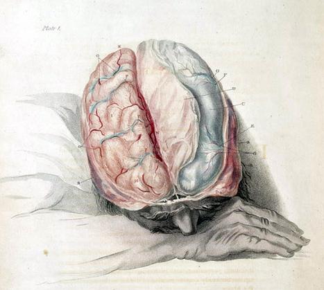 Is the Brain the Key to Understanding Religion? | Random | Scoop.it
