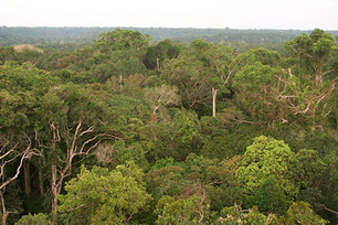 Global Warming Forecast for Amazon Rain Forest: Dry and Dying | World Geography | Scoop.it