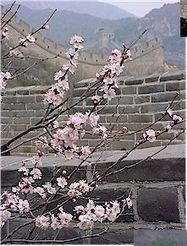 Asian Animal Poems -- Chinese Gushi | Year 1 English - Children's poetry and songs - Asia | Scoop.it