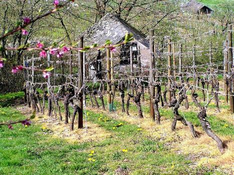 Weinrallye #50: Naturwein - Alles Bio oder was? | Weinrallye | Scoop.it
