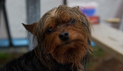 Un homme se sacrifie pour sauver son chien de la noyade | CaniCatNews-actualité | Scoop.it