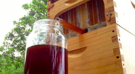 Flow Hive : une ruche «à robinet» qui permet de récolter le miel sans gêner les abeilles | Des 4 coins du monde | Scoop.it