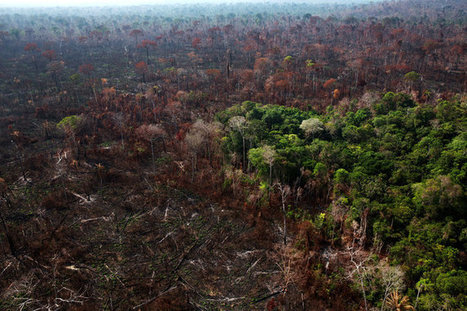 Amazon Forest Becoming Less of a Climate Change Safety Net | Sustainable Futures | Scoop.it