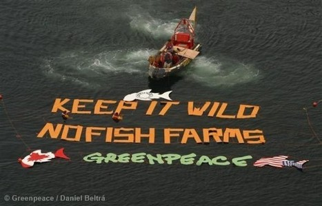 Why Greenpeace can't - and won't - endorse farmed salmon | Greenpeace UK | Aquaculture | Scoop.it