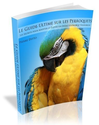 Le Guide Ultime sur Les Perroquets | A-arts-s s s (animaux, nature, écologie, peinture huile) | Scoop.it