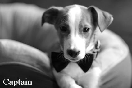 No wonder we love dogs... | Best Flea Treatment for Dogs | Scoop.it