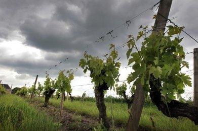 Vignoble bordelais : les viticulteurs renoncent à l'épandage aérien | Christophe Durand Conseils | Scoop.it