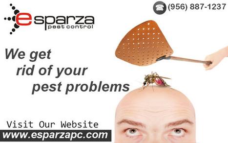 Solve Your Pest Problems With McAllen Expert | Esparza Pest Control | Scoop.it