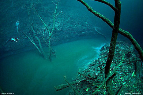 Cenote Scuba Diving | All about water, the oceans, environmental issues | Scoop.it