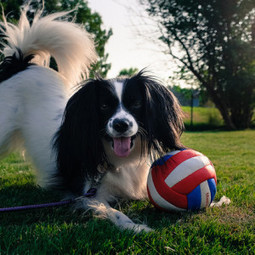 Help Your Pet Keep Cool This Summer | Fab Finds | Scoop.it