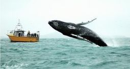 Whale and dolphin survey to assess effect of seismic testing | All about water, the oceans, environmental issues | Scoop.it