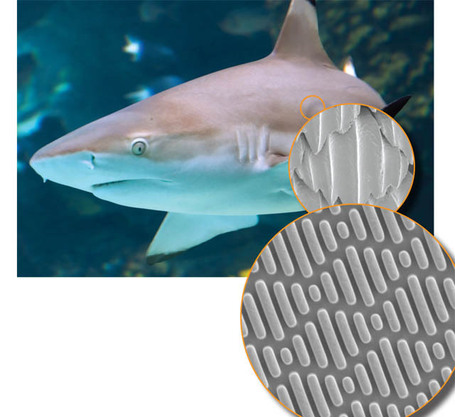 A Material Based on Sharkskin Stops Bacterial Breakouts | Biomimetic Design | Scoop.it