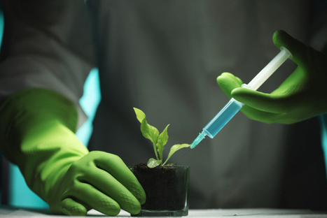 Why Biotech Companies Don't Want Us to Know Where Their GMO Fields Are | Pharmaceutical Information | Scoop.it