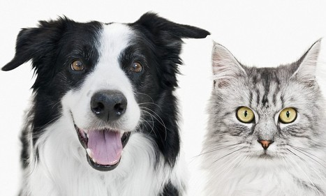 The way we treat cats and dogs is blurring the line between people and pets - and it could affect laws, claims expert | Legal News and Advice | Scoop.it