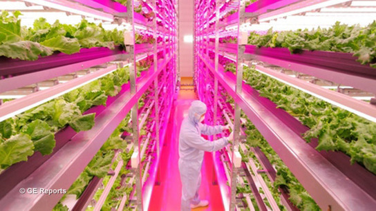 Indoor vegetable farm produces nutrient-dense produce 250 percent faster than outdoor farms, with less waste