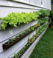 Vertical Gardening Ideas | Wellington Aquaponics | Scoop.it