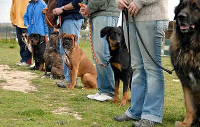 Typical dog training salt lake city errors - My Glam Network | Dog training utah | Scoop.it