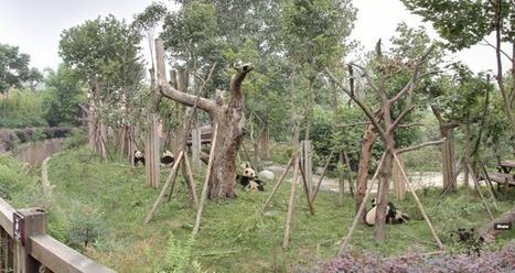 Les zoos en live sur Google Street View | Biodiversité | Scoop.it