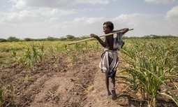 Drought and rising temperatures 'leaves 36m people across Africa facing hunger' | Farming, Forests, Water, Fishing and Environment | Scoop.it