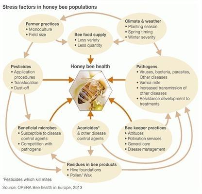 NY Bee Wellness | Organic Farming | Scoop.it