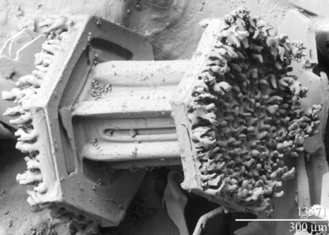 Snowflakes Up Close - A Small, Fragile World | Amazing Science | Scoop.it
