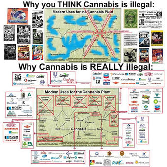 MRLUNKs HideOut: What most people think about cannabis vs. reality | MrLunk's Cannabis Hideout... | Scoop.it