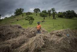La agricultura desempeña un papel clave para reducir las emisiones de gases de efecto invernadero | Ordenación del Territorio | Scoop.it