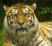 Golden Triangle Tour with ranthambore | Jyoti Day tours | Scoop.it