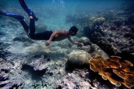Alertan expertos sobre acidificación permanente en océanos por CO2 — La Jornada | Tesis links | Scoop.it