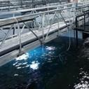 Nanotech silver filter could revolutionize indoor rainbow trout farming | Aquaculture Directory | food | Scoop.it