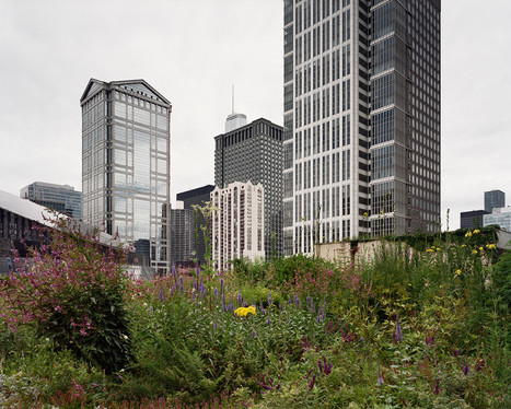 Exploring the Hidden Rooftop Gardens Right Above Our Heads | Greenroofs & Urban biodiversity | Scoop.it