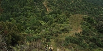 Four of the best bush hikes - Travel - NZ Herald News | Outdoor Digital Strategy | Scoop.it