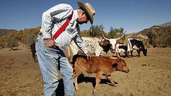 Drought leaves dark cloud over California ranchers, growers | Local Food Systems | Scoop.it