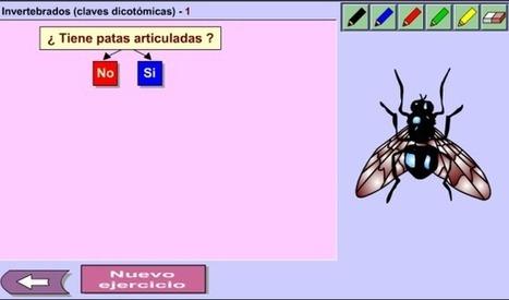 Invertebrados (claves dicotómicas)  1 | Revista GenMagic | Scoop.it