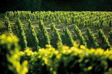 Aquitaine: Les conversions en bio s'accélèrent | Viticulture | Scoop.it