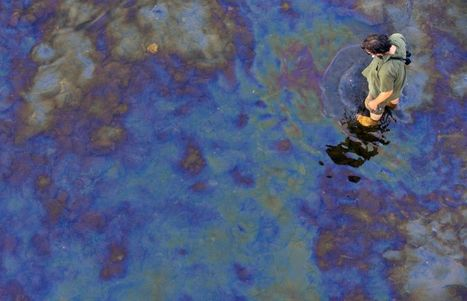 Des poissons intoxiqués au pétrole | Biodiversity protection | Scoop.it