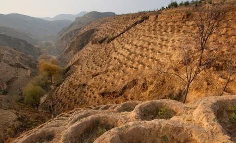 WBCSD - Land Degradation Neutrality | Biodiversity Offsets | Scoop.it