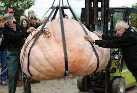LA nouvelle du jour ! La plus grosse courge de Suisse pèse 768 kilogrammes | petite courgerie | Scoop.it