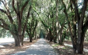 Exploring Belfair - Southern Resort Homes | Southern Resort Homes | Real Estate Marketing in a New World | Scoop.it