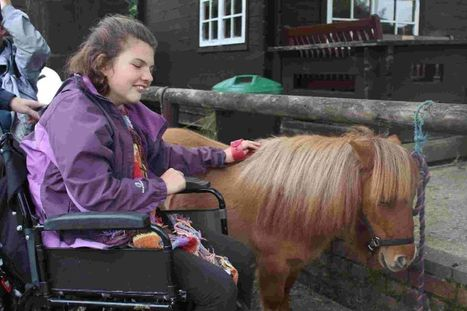 Disability charity appeal to help with funding for Elfin the Shetland pony | People with Learning Disabilties | Scoop.it