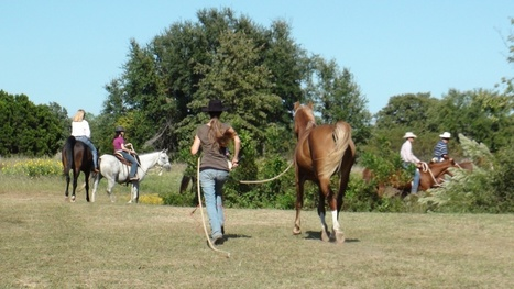 Equine Massage Tips | Avoid Injury In Your Horse This Winter | Equine Bodywork | Scoop.it
