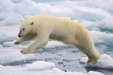 La COP 21 | Journal des Collégiens | CLEMI -  Des nouvelles des élèves | Scoop.it